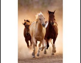 1000 Running Horses